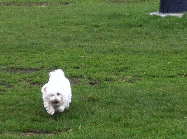 Boris - Herplaatsing Honden in Nederland