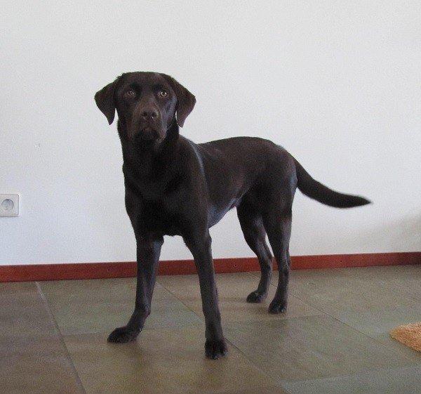 Kyra - Herplaatsing Honden in Nederland
