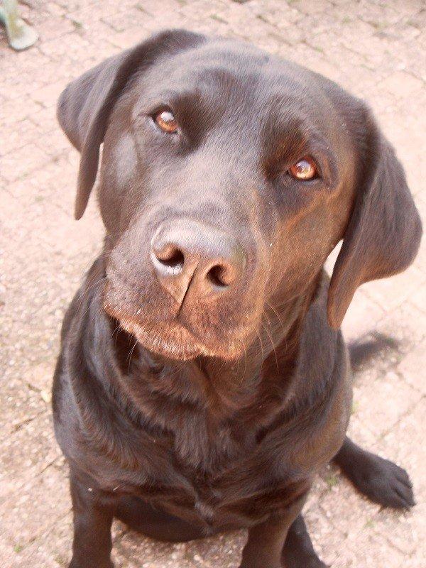 Aishia - Hond zoekt nieuw huis - Herplaatsing Honden in Nederland